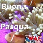 Info WAC 07-2021: Buona Pasqua